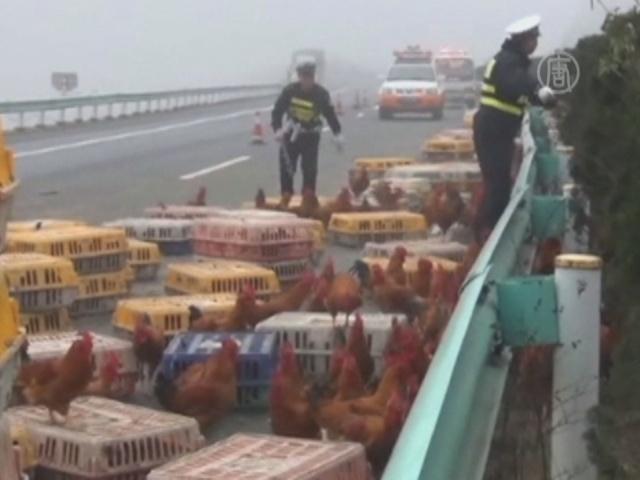 Как китайская полиция ловила разбежавшихся кур