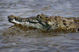 В Австралии крокодил утащил ребенка