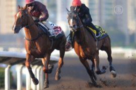 Гонконгцы спешат на скачки перед годом Лошади