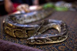 Учитель превратил свой дом в змеиный питомник