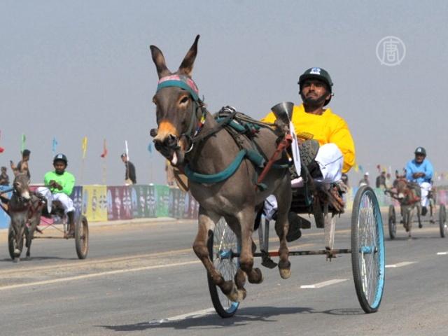 В Пакистане проходят ослиные скачки