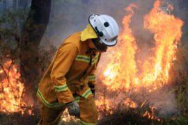 Лесные пожары в Австралии не удаётся потушить