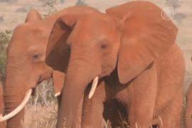 Лондон зовёт на борьбу с убийством диких животных