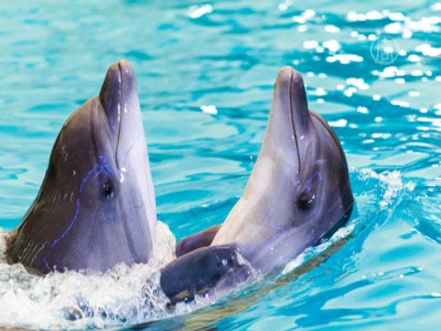 Свадьбу дельфинов сыграли в Ялте