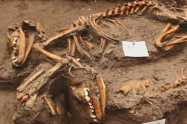 Захоронение собак времён ацтеков нашли в Мехико