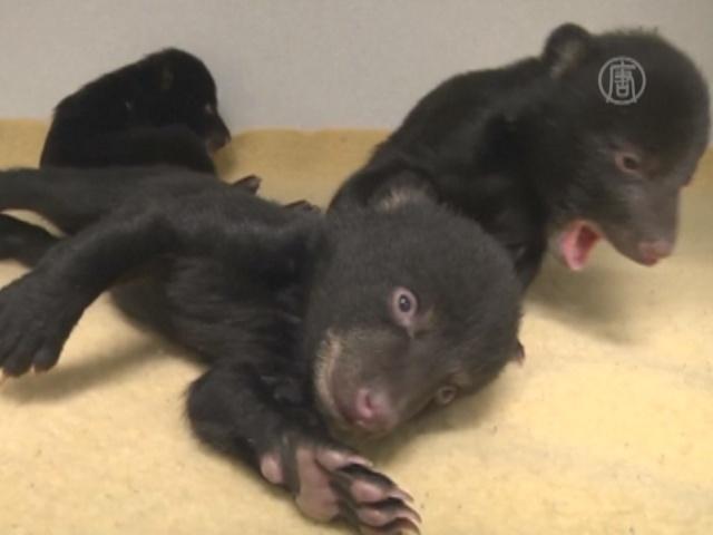 Сирот-медвежат приютили в Орегонском зоопарке