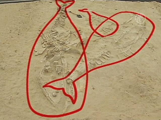 Доисторических китов убили водоросли