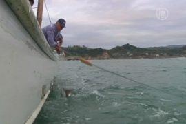 У берегов Фукусимы снова нашли радиацию в рыбе