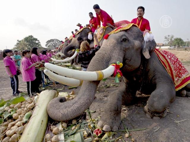В Таиланде отмечают Национальный день слона