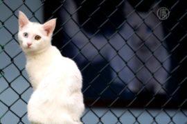 В симферопольской квартире живёт 55 кошек
