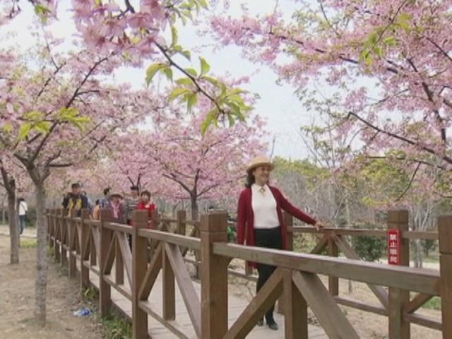Китай «зацвел» с приходом весны