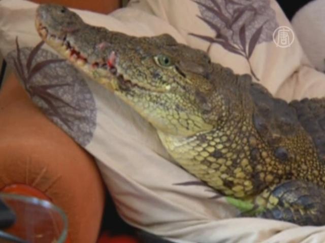 В иркутской квартире живет нильский крокодил