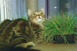 В Лондоне открылось первое кошачье кафе