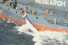 Японии запретили охоту на китов в Антарктике
