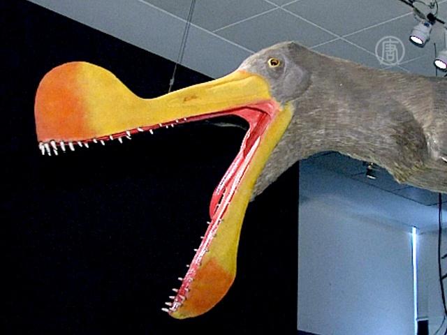 «Летающих ящеров» покажут в нью-йоркском музее