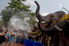 Слоны обливают водой в честь тайского Нового года