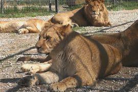 Крымскому сафари-парку нечем кормить животных