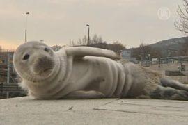 На набережную в Швеции забрел тюлененок