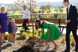 Уильям и Кейт посадили дуб в Канберре