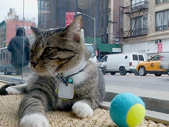 Первое «кошачье кафе» открылось в Нью-Йорке