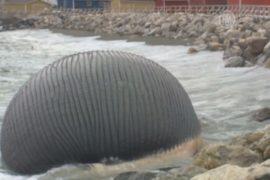 Туша кита наводит панику в канадском поселке