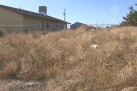 В Аризоне страдают от нашествия перекати-поле