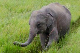 Дикие слоны напали на деревню, есть жертвы