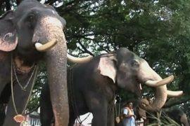 Слоны в Индии проходят медосмотр перед праздником