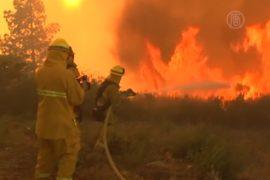 Пожар в Калифорнии локализовать пока не удалось