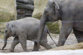 Слоны в Индии страдают от водного кризиса