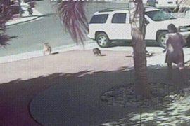 Кошка спасла мальчика от собаки и стала звездой