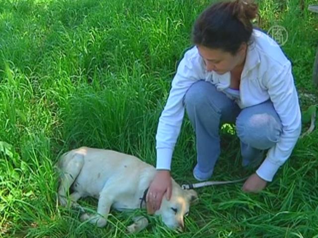 В Сербии потерянным собакам помогают найти хозяев