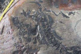 Тающие ледники обнажили древние окаменелости