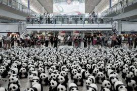 1600 панд выгрузилось в аэропорту Гонконга