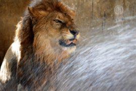 Животных в Индии спасают от жары