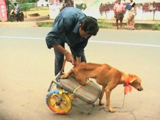 Индус спас бездомного пса-инвалида
