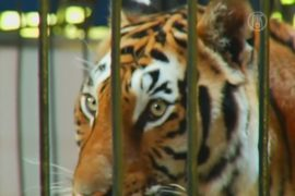 В Мехико запретили животных в цирках