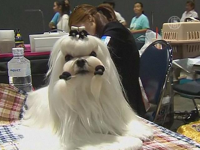 Лучших собак показали в Таиланде