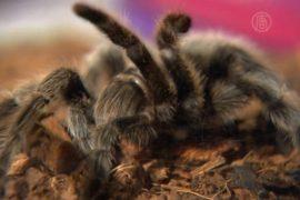 Узнать о жизни пауков приглашают в Нью-Йорке