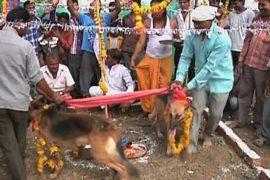 Индийцы женят собак, чтобы вызвать дождь