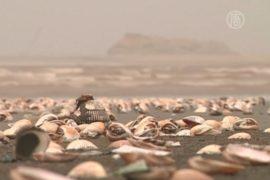Тысячи моллюсков выбросило на берег в Пакистане