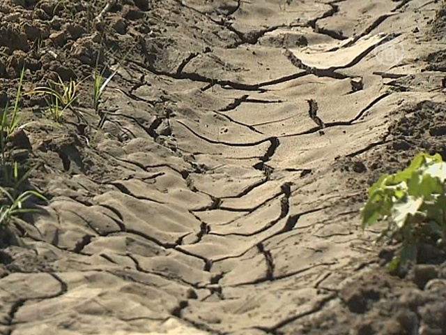 Фермерам Калифорнии грозит банкротство