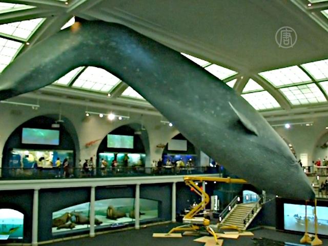 Как моют огромные экспонаты в музее?