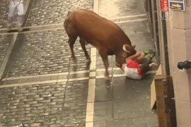 Забеги с быками завершились травмами троих