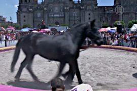Мехико запретил животных в цирках