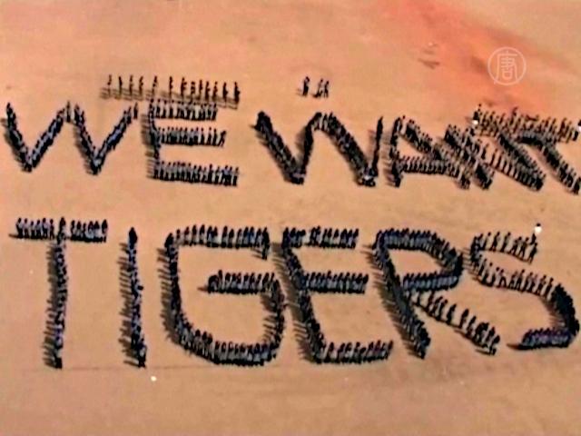 Школьники сформировали живую цепь в защиту тигров