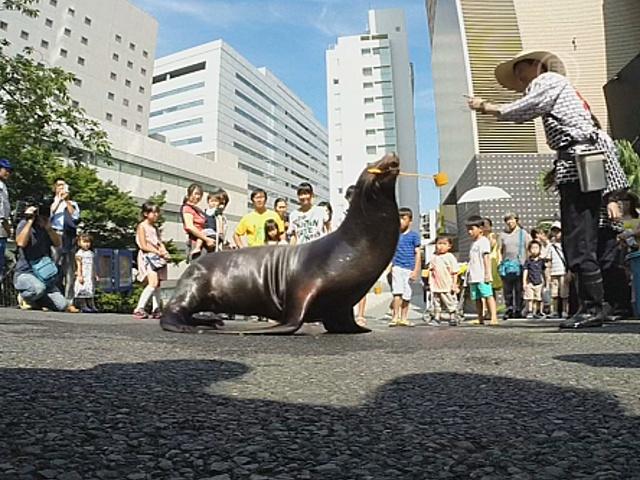 Морской лев и пингвин спасают токийцев от жары