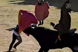 В «корриде по-перуански» участвует кондор