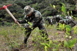 Полиция Боливии уничтожила кокаиновую лабораторию