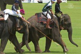 В Таиланде снова играют в поло на слонах